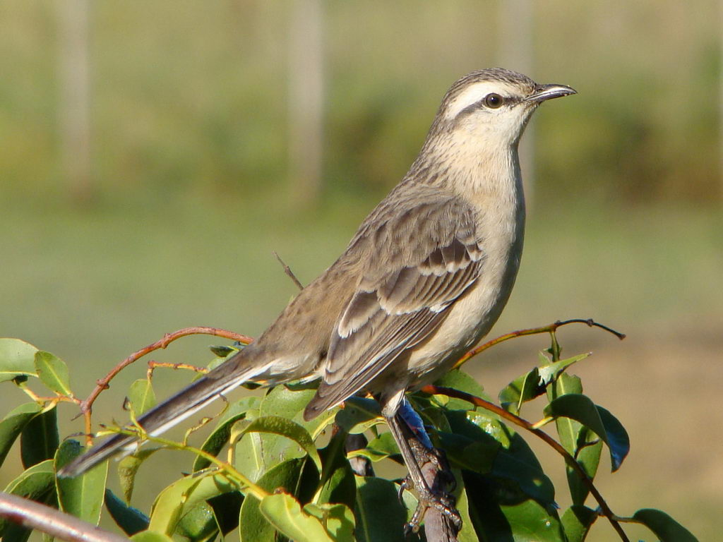 mocking bird What: mockingbird seeks to connect the christian faith with the realities of everyday life in fresh and down-to-earth ways why: are we called mockingbird.