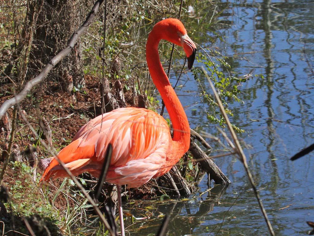 flamingo island just big black dicks