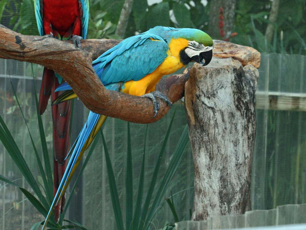 birds of the world macaws